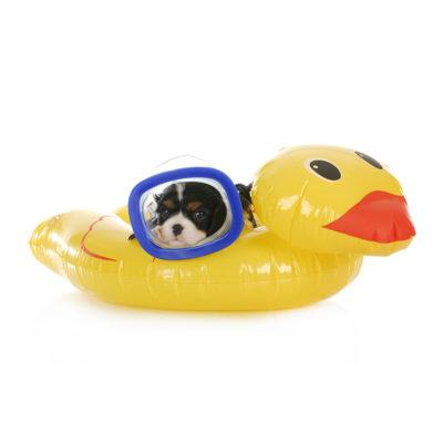 Plavajoče igrače